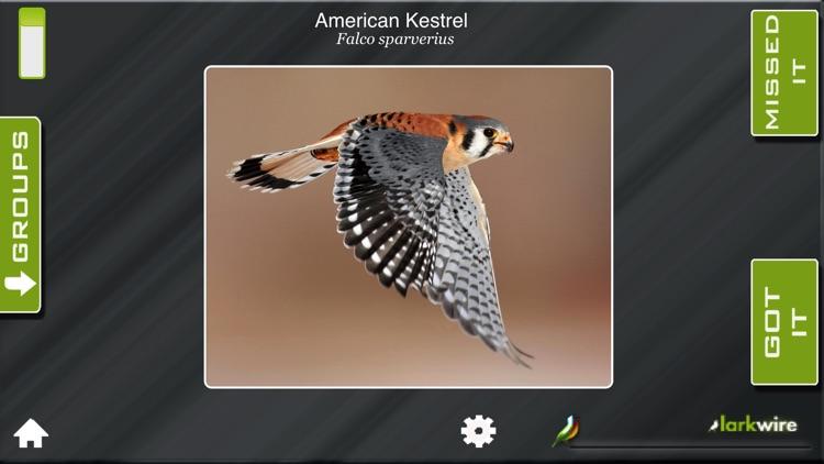 Larkwire Learn Bird Songs 1
