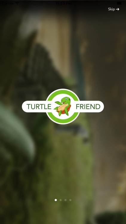 Turtle Friend