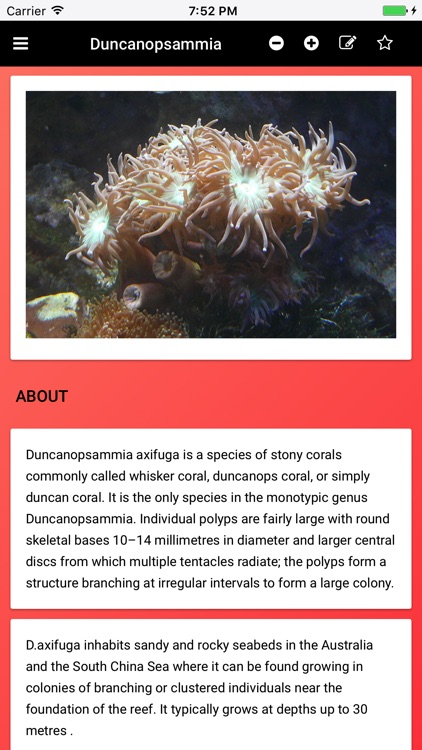 Coral Species: Types of Coral