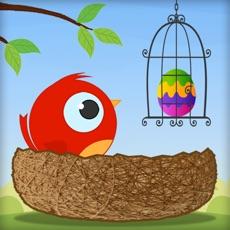 Activities of Cute Bird : Eggs