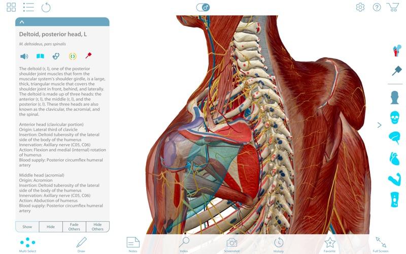 Muscle Premium - Human Anatomy, Kinesiology, Bones | App Price Drops