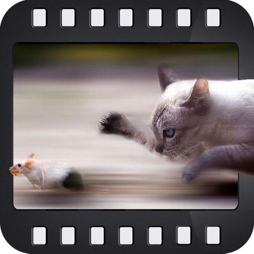 Focus In Motion
