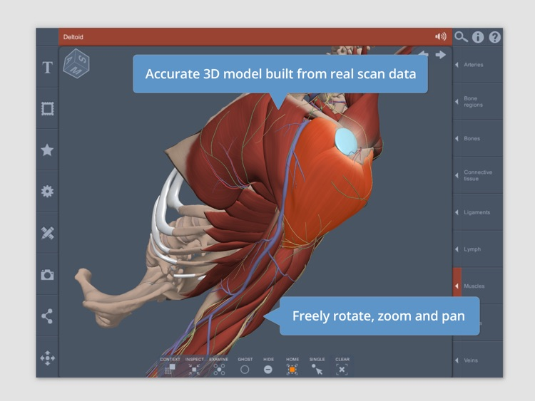Shoulder: 3D Real-time