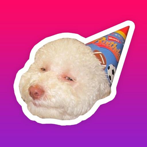Funny dog faces memes - photo#52