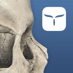 3D Skull Atlas