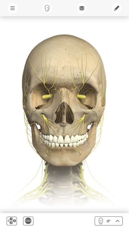 Interactive Anatomy - ZA by Allergan, Inc.