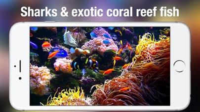 Screenshot #9 for Aquarium Live HD