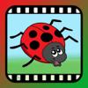 Video Touch – Insekten