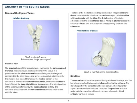 Anatomy And Radiography Of The Equine Tarsus By Educational