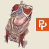 Abdomen: 3D Real-time
