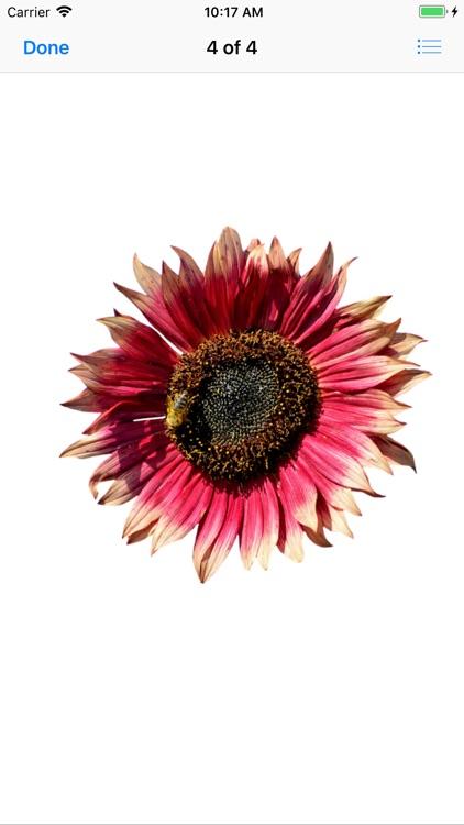 Sunflower Stickers screenshot-4