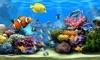 Real Life Aquarium