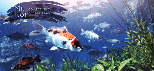 My koi on the app store for Koi pond game online