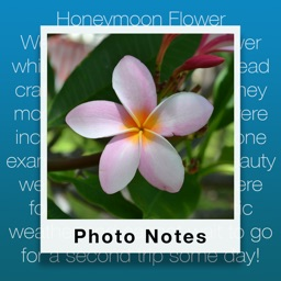 Photo Notes - Add context to your photos!