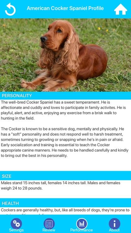 Dog Breeds Guide & Quiz
