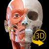 Muscle | Skeleton - 3D Anatomy