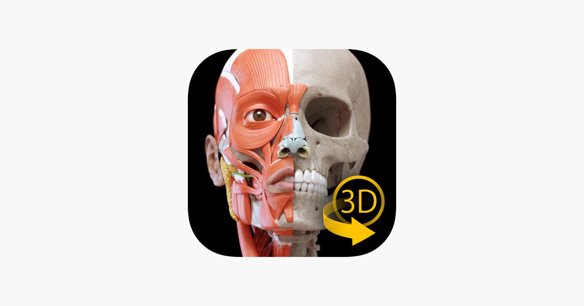 Músculos Esqueleto - Anatomía en App Store