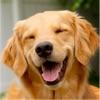犬の音 - 犬の恋人のための楽しみ - iPadアプリ