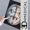 Radiology - Head