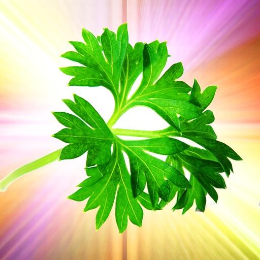 Magical Herbs Bible