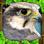 Falcon Simulator