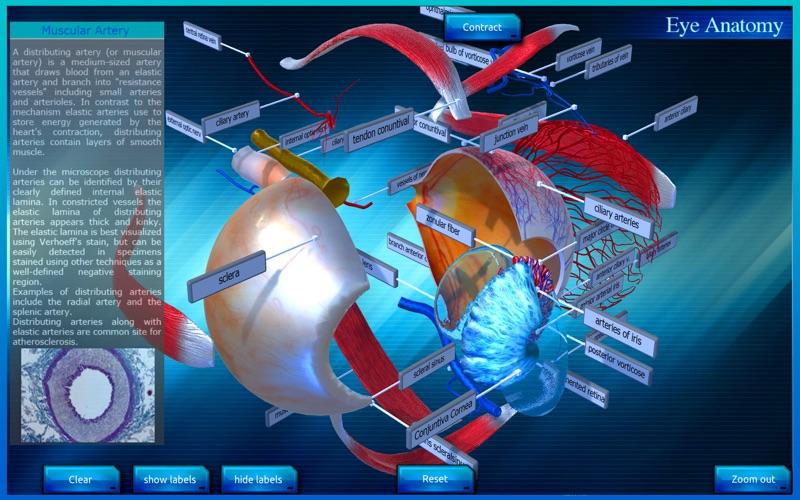Eye Anatomy 3D скриншот программы 5