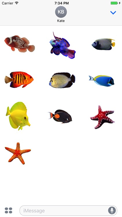 Saltwater Fish Stickers