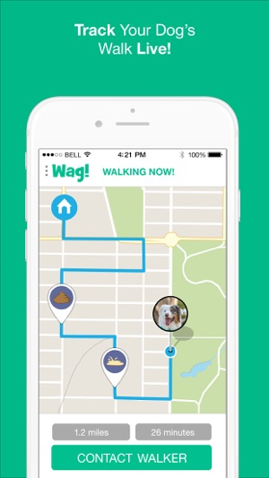 search by image on iphone wag instant walkers on the app 5596