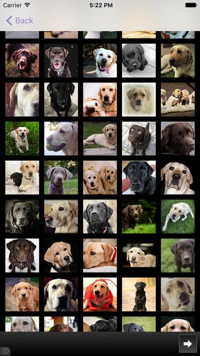Dog Breeds - for dog lovers - screenshot four