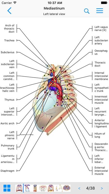 IMAIOS e-Anatomy screenshot-0
