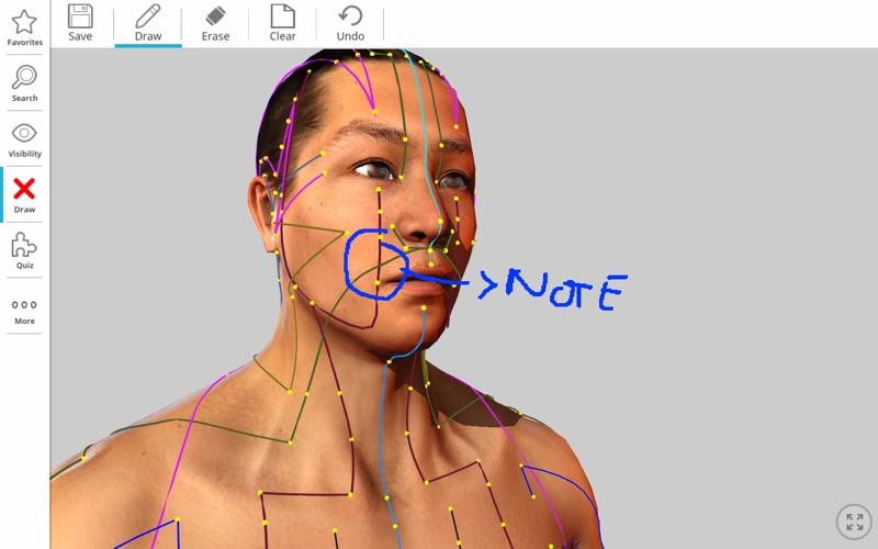 Visual Acupuncture 3D скриншот программы 6
