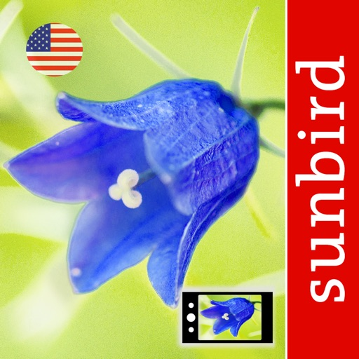 Wildflower Id USA Photo Recognition Guide NE