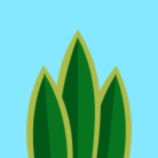 Terrarium ∙