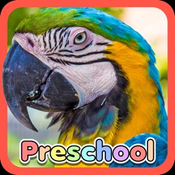 Wild Animal Preschool Games