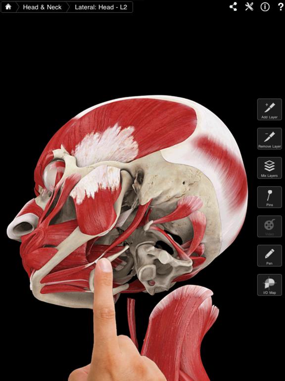 Muscle System Pro III Screenshot 1