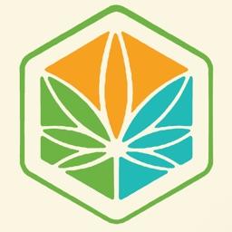 Cannabis News Box