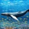 蓝鲸生存挑战模拟器游戏: 愤怒的鲨鱼攻击进化