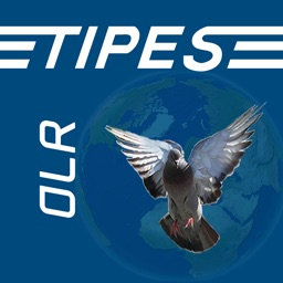 TIPES One Loft Race