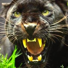 Activities of Virtual Panther Life Simulator