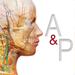 63.解剖和生理学
