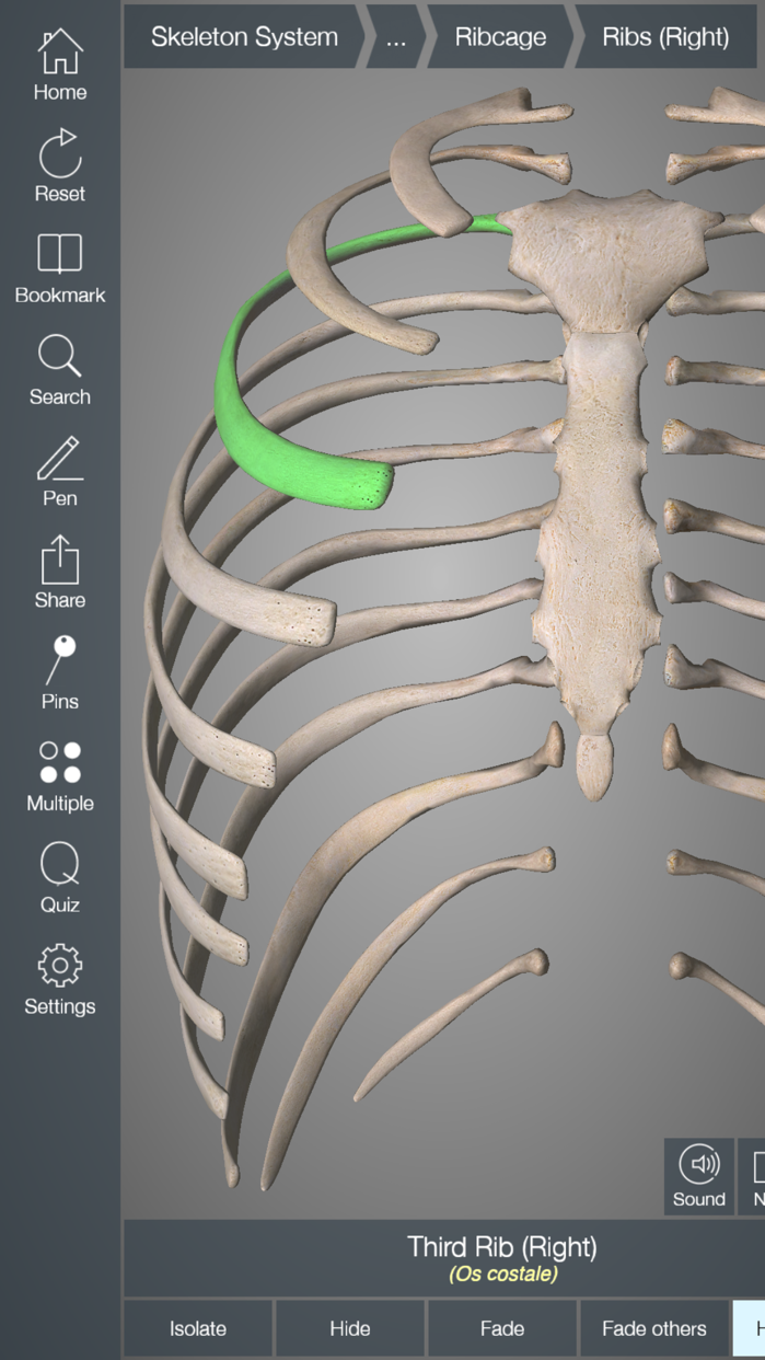 Essential Skeleton 4 Screenshot