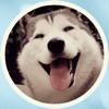 Husky Faces Stickers