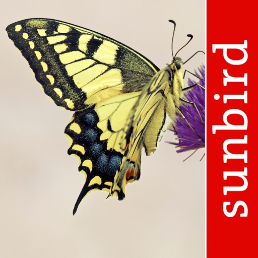 Schmetterling Id - Tagfalter