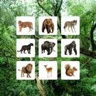 Jungle Sudoku - Puzzle Game icon