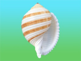 She sells sea shells in the App Store