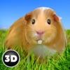 豚鼠模拟游戏