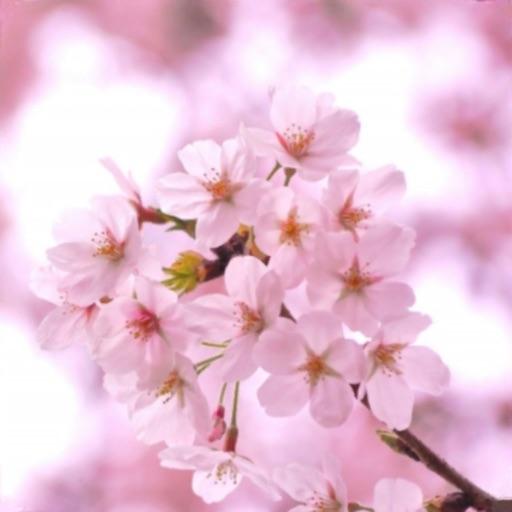 脱出ゲーム 春桜