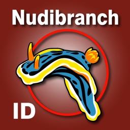Nudibranch ID Indian Ocean Red Sea