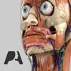 Pocket Anatomy (2018) 앱 아이콘 이미지