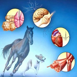 Veterinary Terminology Quiz